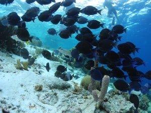 Fish - Klein Bonaire